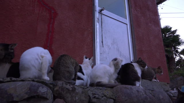 track around feral domestic cats waiting outside house - große tiergruppe stock-videos und b-roll-filmmaterial