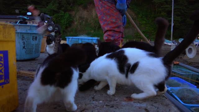 vídeos de stock, filmes e b-roll de track around group of feral domestic cats squabbling over fish on dockside - grupo médio de animais