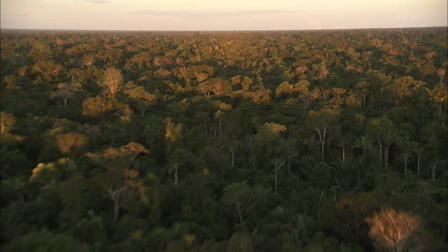 Track backward over dense rainforest bathed in sunlight to reveal areas of deforestation Available in HD.