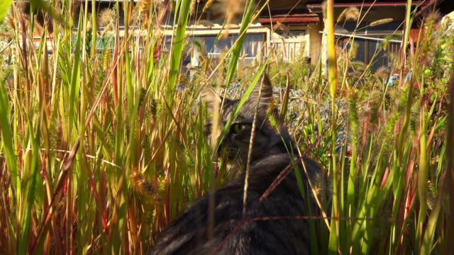 track behind feral domestic cat walking through long grass onto mound - stray animal stock videos & royalty-free footage