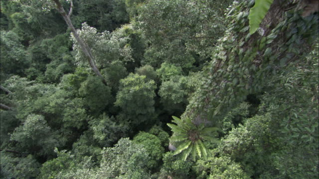 track down through rainforest canopy to floor, sabah, borneo - malaysia stock videos & royalty-free footage