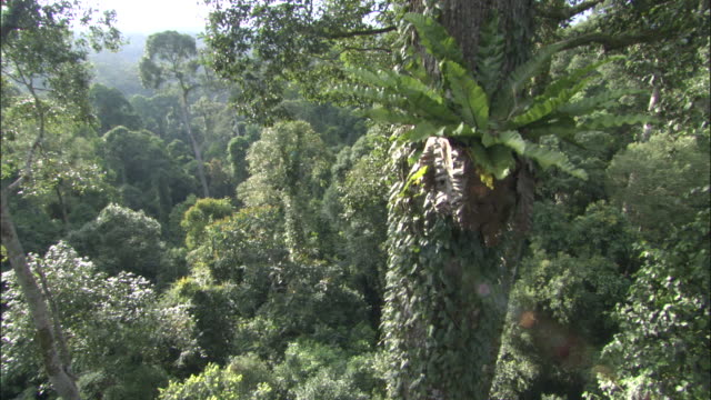 track down through rainforest canopy to floor, sabah, borneo - copertura di alberi video stock e b–roll