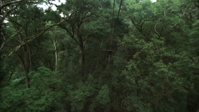 Track forward across zip line through treetops, Tsitsikamma National Park. Available in HD.