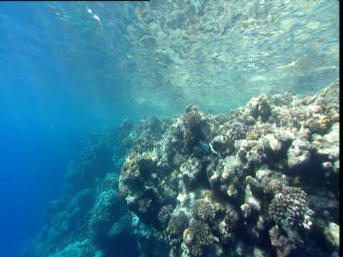 track forward along coral reef - tierisches exoskelett stock-videos und b-roll-filmmaterial