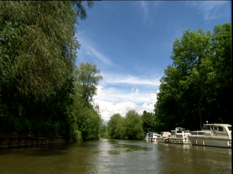 stockvideo's en b-roll-footage met track forward along tree-lined section of river thames at henley with cruisers moored along one bank - plant attribute