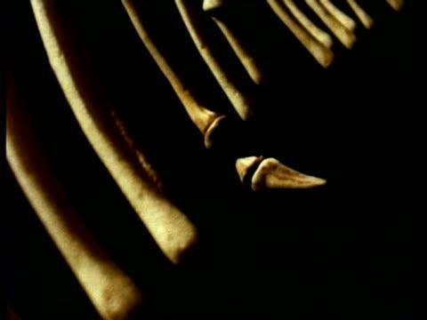 cu track forward inside snake ribcage, one side of ribs against black background and claw - 動物の骨点の映像素材/bロール