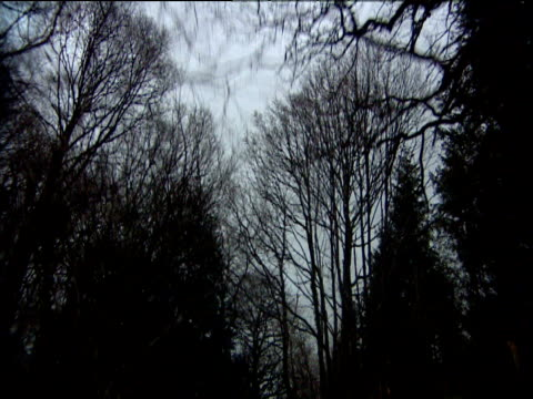 stockvideo's en b-roll-footage met track forward looking up through silhouetted branches of bare trees zoom in to treetop lake district - plant attribute