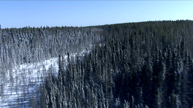 track forward over a frozen river winding through evergreen forests of nunavut territory. available in hd. - 寒帯林点の映像素材/bロール