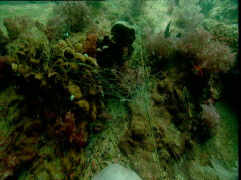 vídeos de stock, filmes e b-roll de track forward over abandoned fishing net caught on coral reef, phuket - embaraçado