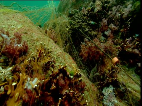 vídeos de stock, filmes e b-roll de track forward over abandoned fishing net tangled on coral reef, phuket - embaraçado