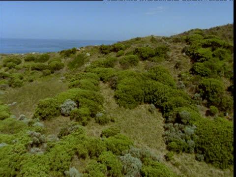 track forward over cliffs to coast, twelve apostles sea stacks in distance, victoria, australia - antarctic ocean stock videos & royalty-free footage