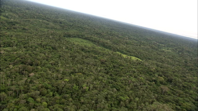 track forward over coca plantation amidst vast rainforest available in hd. - copertura di alberi video stock e b–roll