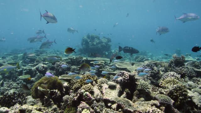 track forward over coral reef, indian ocean. - indian ocean stock videos & royalty-free footage