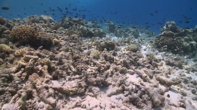 Track forward over damaged Hard Coral reef, Vaavu Atoll, The Maldives