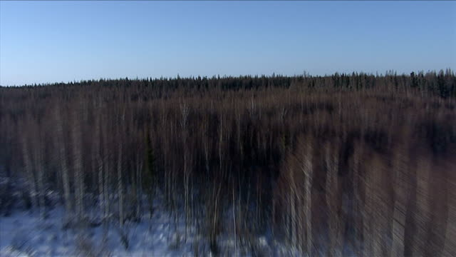 track forward over dense boreal forests and snow covered ground, canada. available in hd. - boreal forest stock videos & royalty-free footage