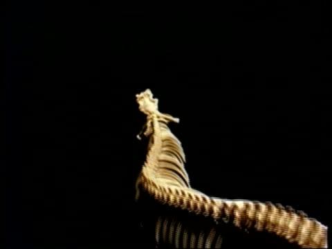 CU track forward over half of snake skeleton along vertebrate and many ribs against black background