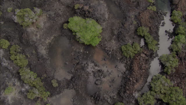 Track forward over mangroves Isabela Galapagos Islands Available in HD.