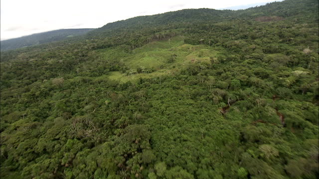 track forward over rainforest and zoom in on clearing for coca harvest available in hd. - copertura di alberi video stock e b–roll