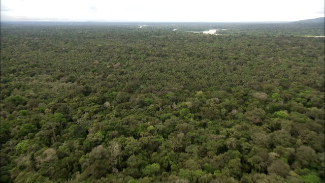 Track forward over vast rain forest canopy Available in HD.
