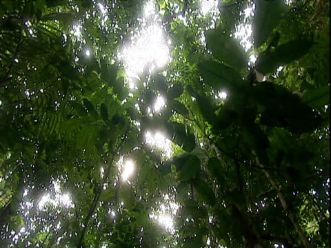 track forward under forest canopy amazon rainforest venezuela - tree canopy stock videos and b-roll footage