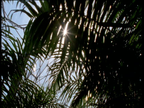 track forward under palms in tropical biome, eden project, st austell - st austell stock videos & royalty-free footage