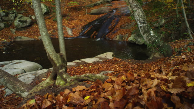 w/s track forward waterfalla and pool, stream in a forest, autumn - beech tree stock videos and b-roll footage