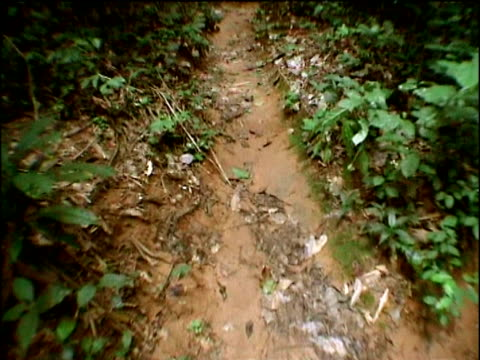 "stockvideo's en b-roll-footage met track forwards along path in jungle, congo - ""bbc natural history"""