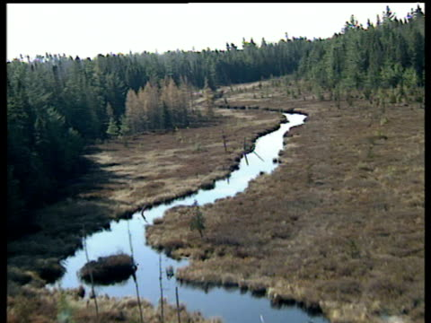 Track forwards from helicopter over river and woodland fir trees either side of river