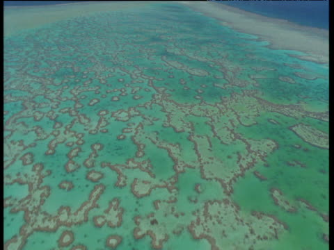 track forwards over coral reef, heron island - shallow stock videos & royalty-free footage