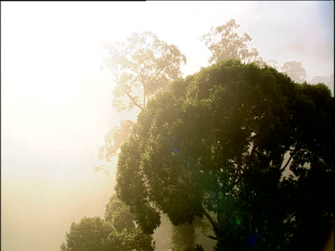track forwards over tree tops in rainforest canopy, borneo - ボルネオ島点の映像素材/bロール