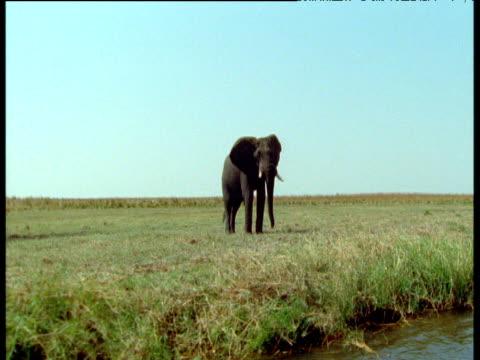 vídeos de stock e filmes b-roll de track left along river bank past herd of elephants, africa - embarcação comercial