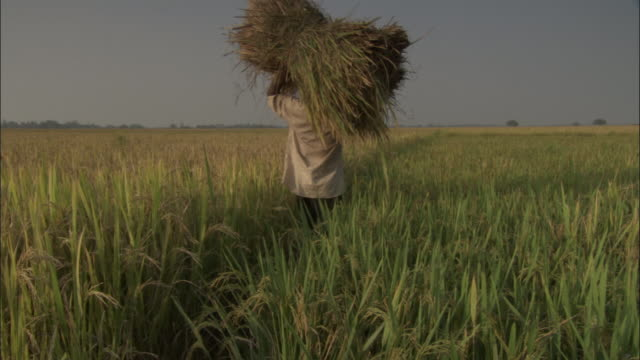 track left as man carries stack of hay through field, varanasi available in hd. - hay stack stock videos & royalty-free footage