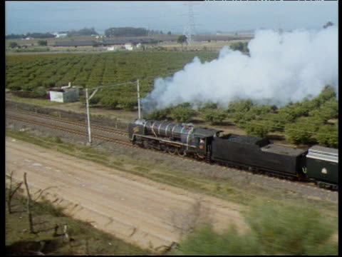 track left as steam train passes field of fruit trees south africa - railroad car stock videos & royalty-free footage
