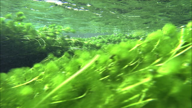 track left over algae in lake chuzenji, nikko, tochigi diving shot - alge stock-videos und b-roll-filmmaterial