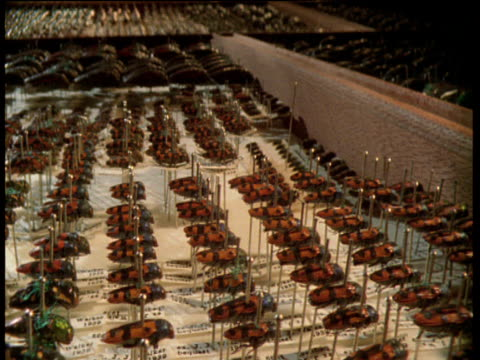 vidéos et rushes de track left over drawers full of preserved and pinned beetles, natural history museum - collection