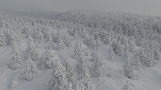 track left over frozen trees (juhyo) in snow. japan - snow stock videos & royalty-free footage