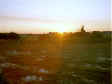 vídeos de stock e filmes b-roll de track left over small herd of impala jumping through flooded grassy plains at sunset. - planície
