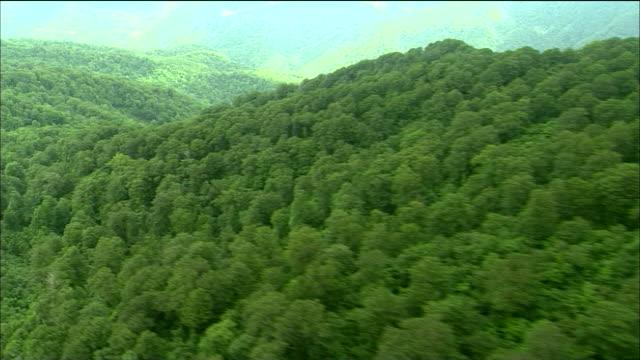 track left over tree covered shirakami mountains, akita, aomori, japan aerial shot - 木立点の映像素材/bロール