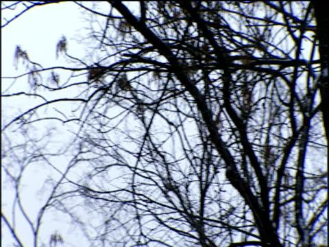 track left past barren branches of winter trees moscow - 小枝点の映像素材/bロール