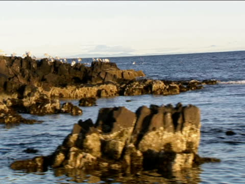 track left past rocks and gulls isle of may - may stock videos & royalty-free footage