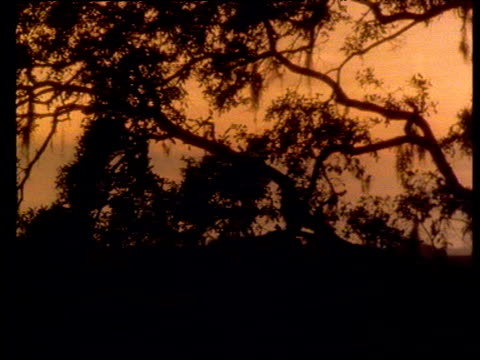 track left past trees silhouetted against amber sunset sky - amber stock videos & royalty-free footage