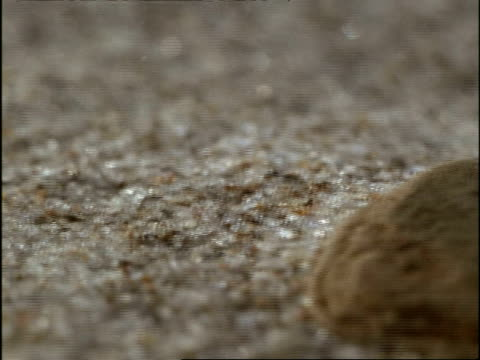 bcu track left, sand grains falling during sandstorm, usa - sandstorm stock videos & royalty-free footage