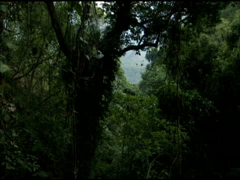 track left through purple crow butterfly-filled forest - taiwan stock videos & royalty-free footage