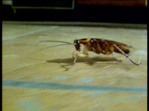 track left with cockroach running across kitchen floor, usa - ゴキブリ点の映像素材/bロール