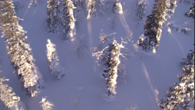 track over a snowy boreal forest. available in hd. - taiga stock videos and b-roll footage