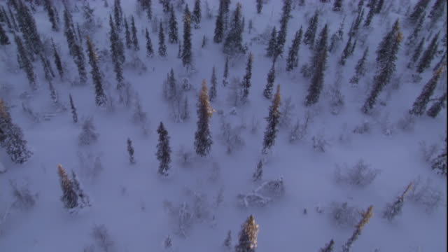 track over a snowy boreal forest. available in hd. - 寒帯林点の映像素材/bロール