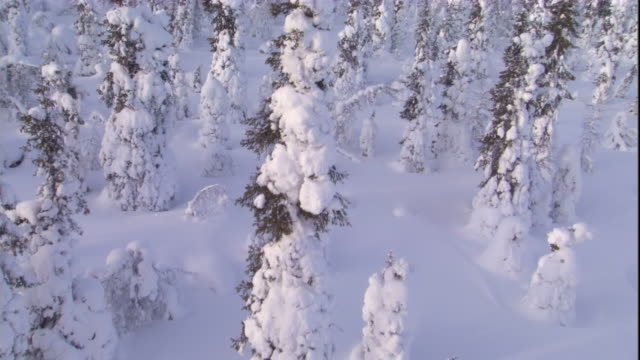 track over a snowy boreal forest. available in hd. - boreal forest stock videos and b-roll footage