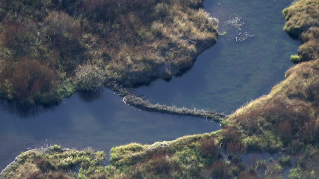 track over beaver dam in river, yellowstone, usa - beaver dam stock videos and b-roll footage