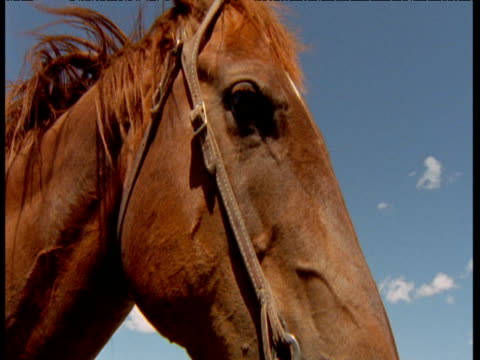 track over bridled face of horse which is then ridden away against blue sky, montana - briglia video stock e b–roll