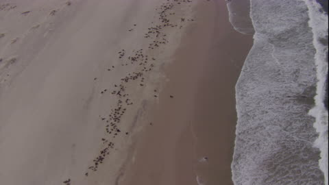 track over cape fur seal colony, skeleton coast, namibia - cape fur seal stock videos & royalty-free footage